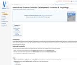 Internal and External Genitalia Development - Anatomy & Physiology