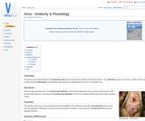 Anus - Anatomy & Physiology