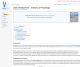 CNS Development - Anatomy & Physiology