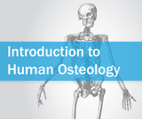 Introduction to Human Osteology