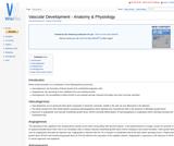 Vascular Development - Anatomy & Physiology