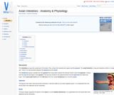 Avian Intestines - Anatomy & Physiology